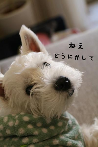 【犬】欲しい・・・。