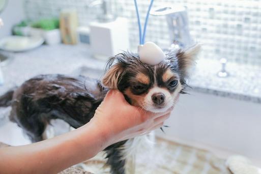 【犬】まりちゃん、お風呂に入る。お風呂の便利グッズ