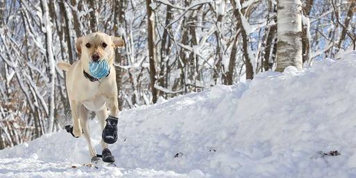 【犬靴】靴物語 その① ~犬靴を語る。  犬靴の座談会メンバー紹介
