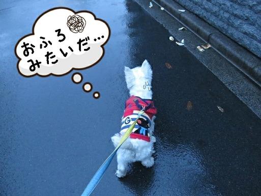 【犬】不発