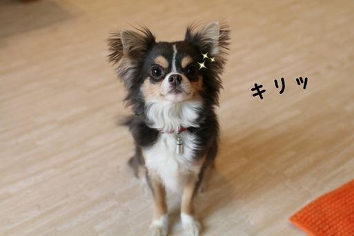 【犬】今朝の、ワンコ