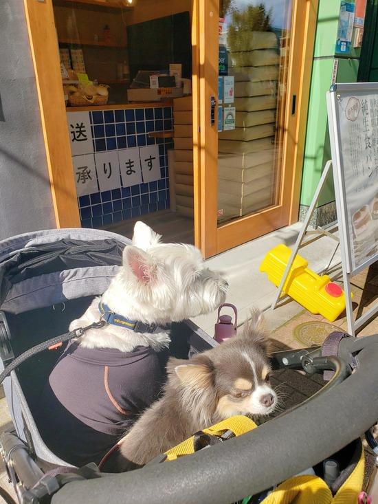 【犬と】お散歩