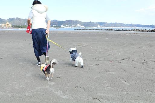 【犬旅】海岸で遊んでみたかった