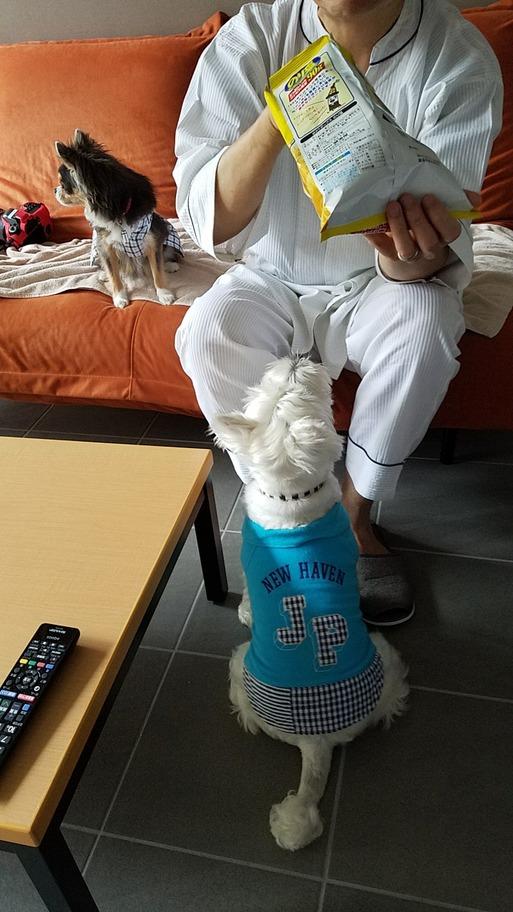 【犬旅】朝のお茶