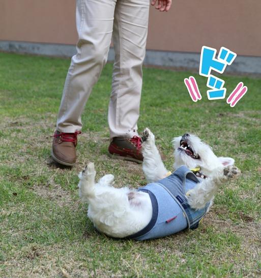 【犬旅】レジーナリゾート蓼科のドックランで