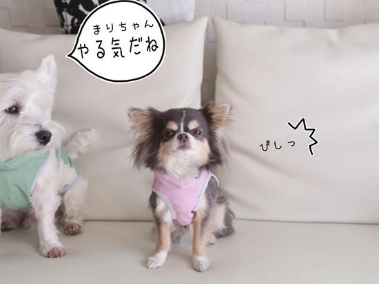 【犬グッズ】アルファアイコンのお洋服