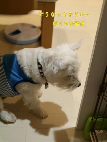 ウエスティ 白犬