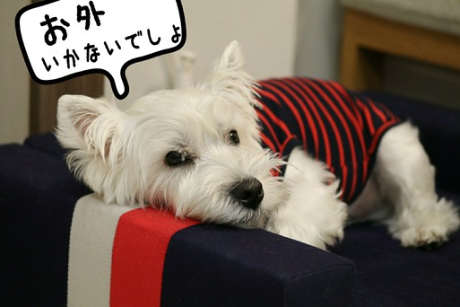 【犬】雨だねぇ~