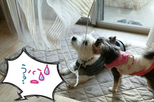 【犬】カーテンが・・・・
