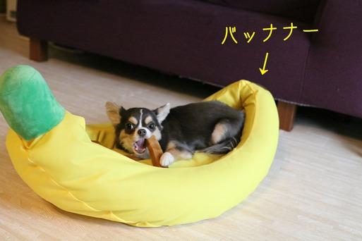 【犬】ビックバナナ