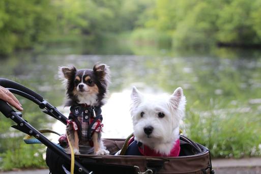 【犬旅】雲場池とカフェ