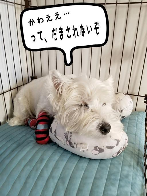 【犬】枕犬