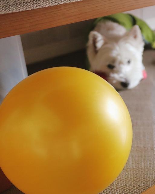 【ダイソーへ行く①】ダイソーのボール物語