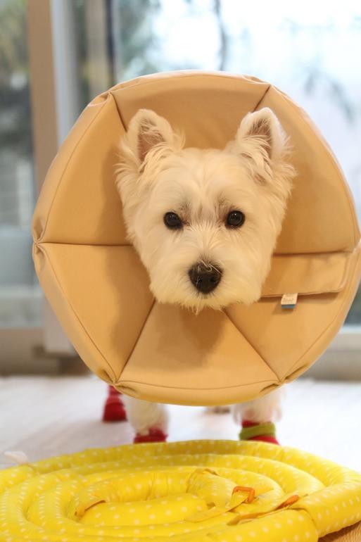 【犬】NEWエリザベスカラー