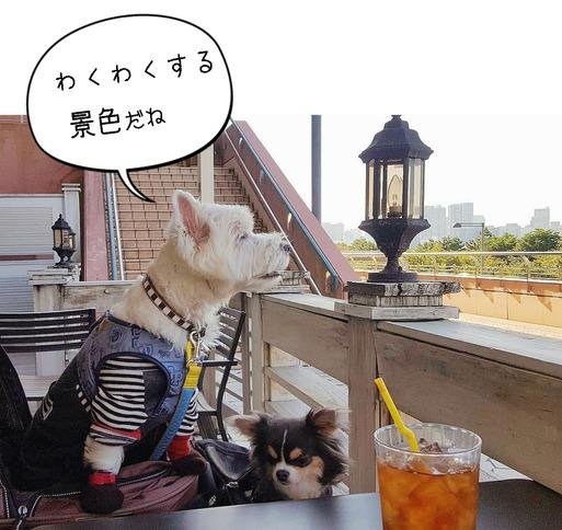 【カフェ】エッグスシングス お台場店