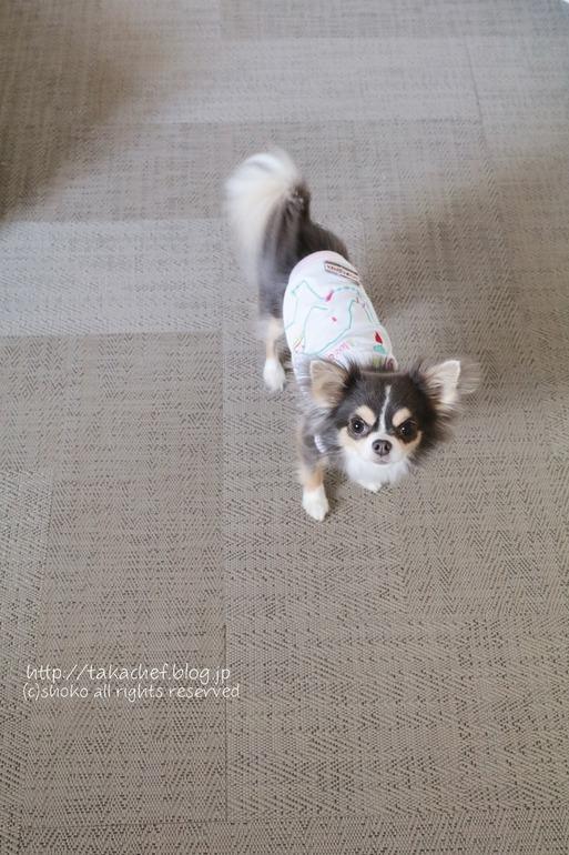 【ご質問のお返事 他の質問も追記しました。】犬の足によさそうな床 ~ボロン~