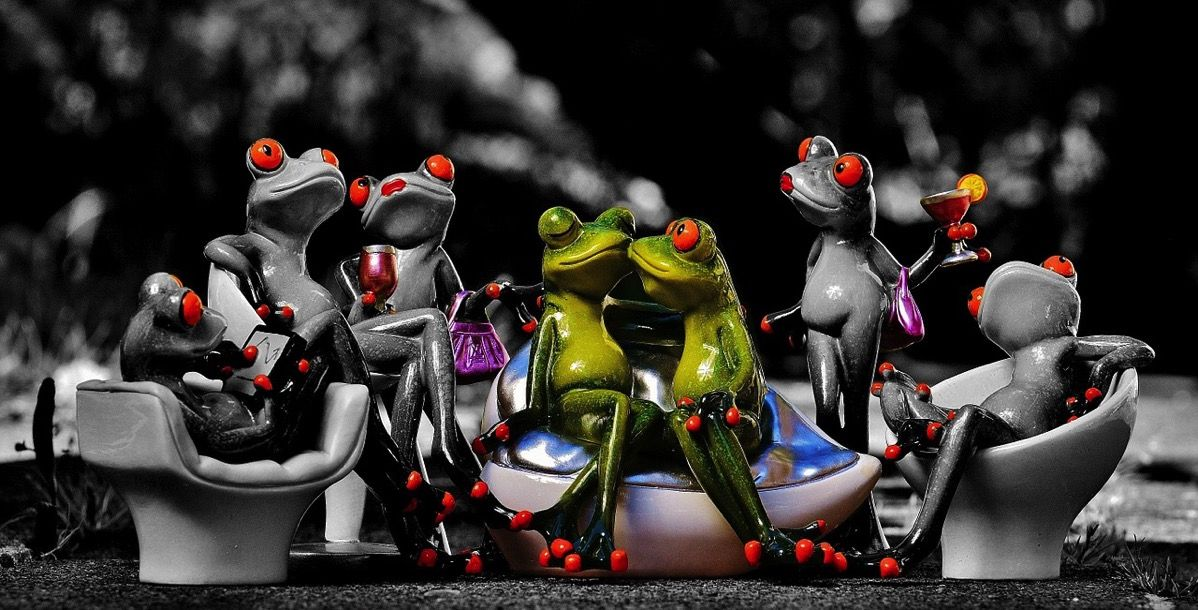Frogs 1421183 1280