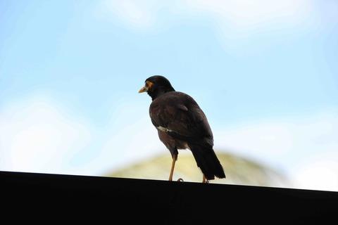 ヒルトンにいた鳥