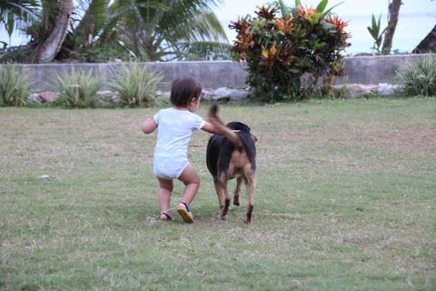 犬と追いかけっこする娘