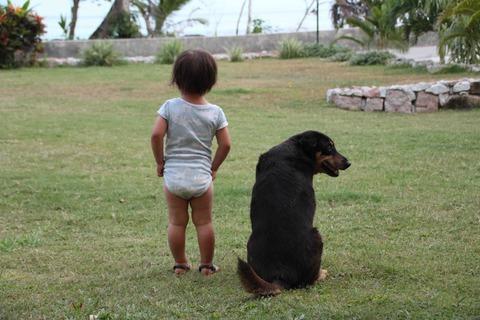 犬と佇む娘