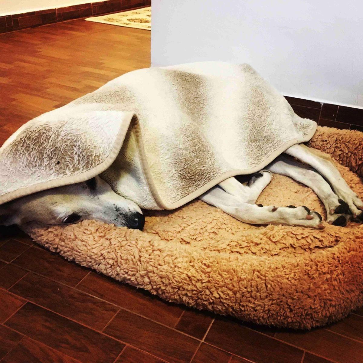 毛布をかけて寝ます