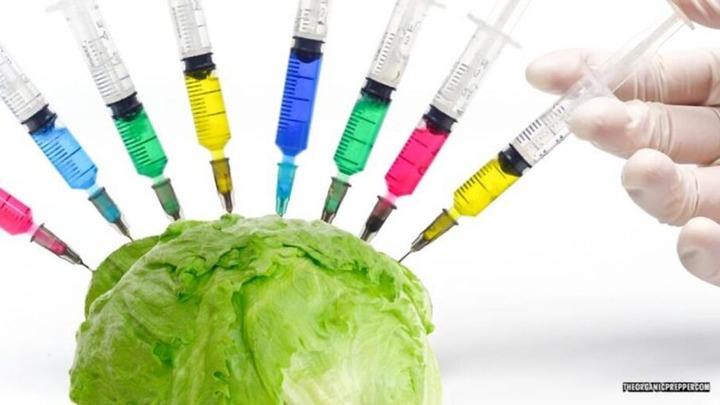 Lettuce-Vaccinate-You-and-Other-Reasons-You-Cant