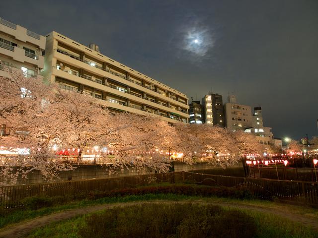 20150402_中目黒_桜-3
