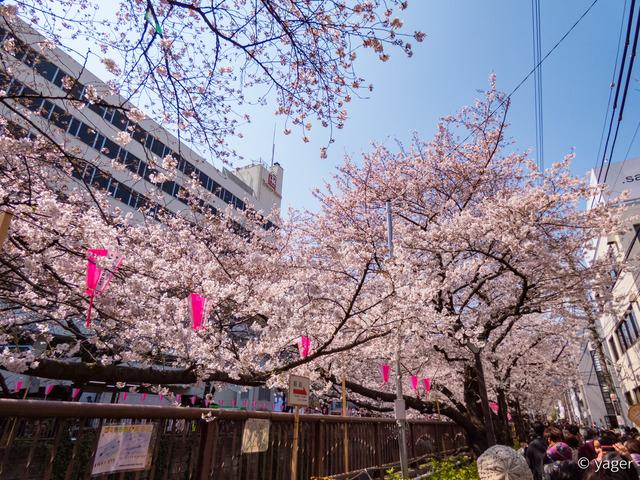 2017-04-04_桜_FZ85_目黒川-00006
