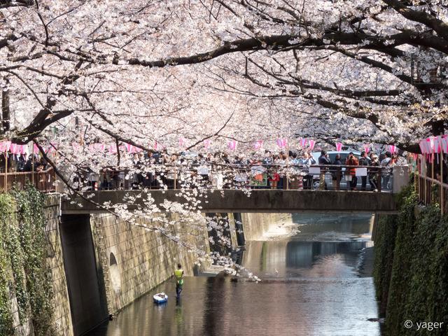 2017-04-04_桜_FZ85_目黒川-00012