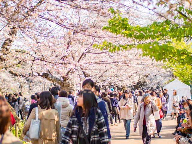 2017-04-04_桜_EM5_靖国神社千鳥ヶ淵-00003