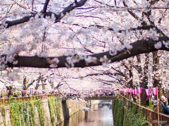 2017-04-04_桜_EM5_目黒川-00005