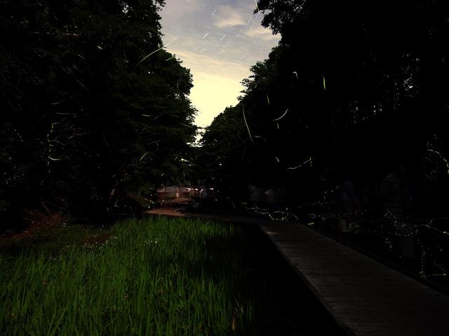 2016-06-19_濃溝の滝_05