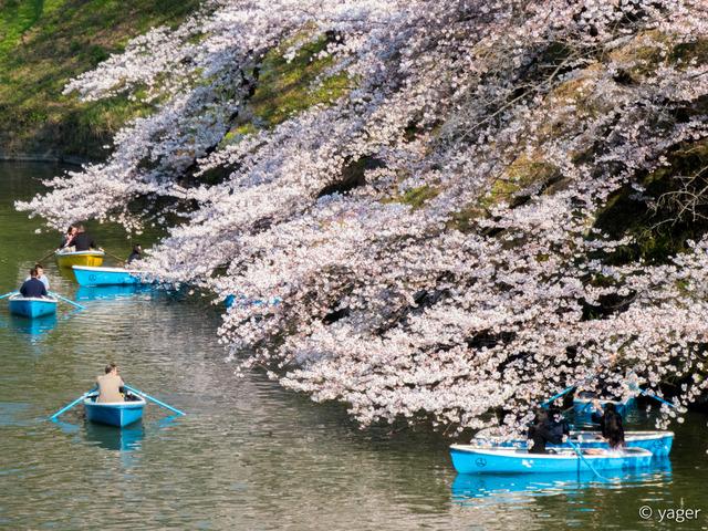 2017-04-04_桜_FZ85_靖国神社千鳥ヶ淵-00007