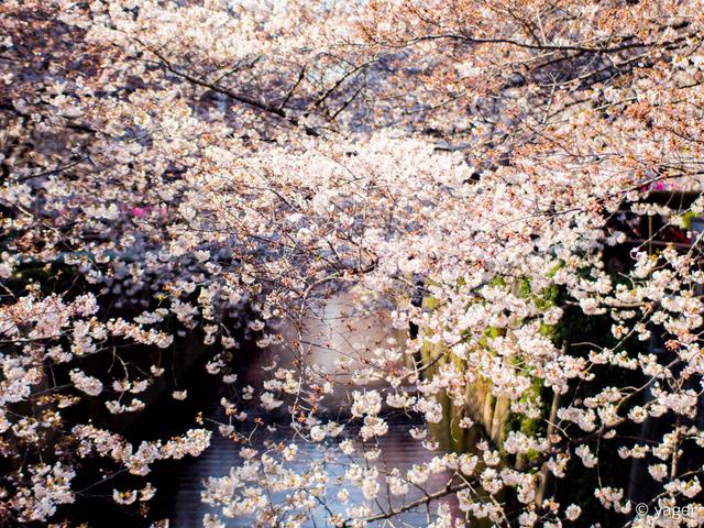2017-04-04_桜_EM5_目黒川-00007