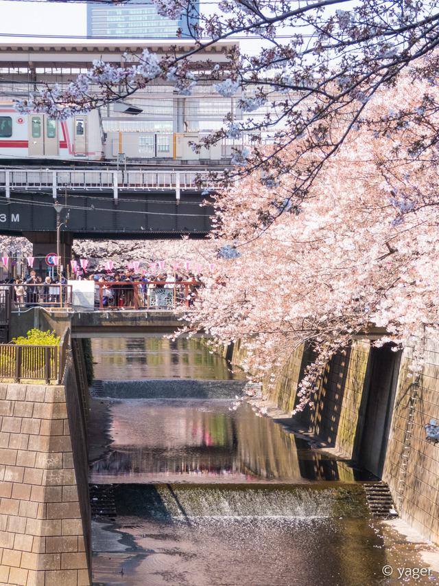 2017-04-04_桜_FZ85_目黒川-00002