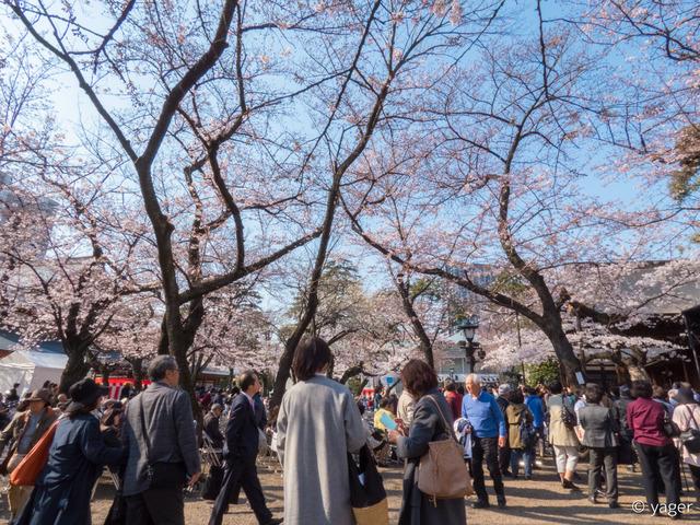 2017-04-04_桜_FZ85_靖国神社千鳥ヶ淵-00005