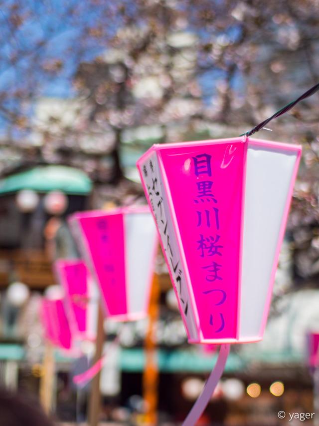 2017-04-04_桜_EM5_目黒川-00001