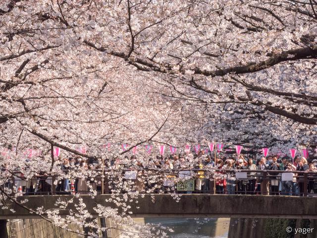 2017-04-04_桜_FZ85_目黒川-00015