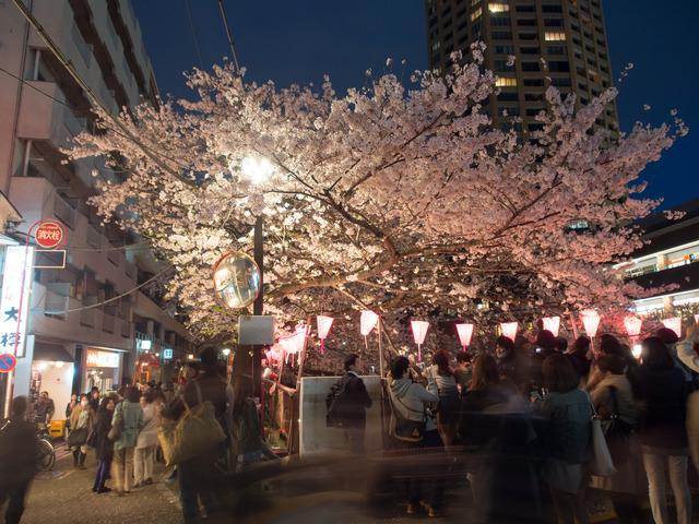 20150402_中目黒_桜-1