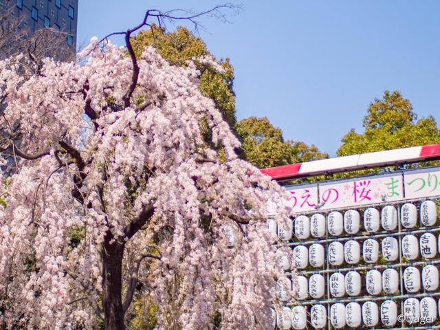 2017-04-04_桜_EM5_上野公園-00030