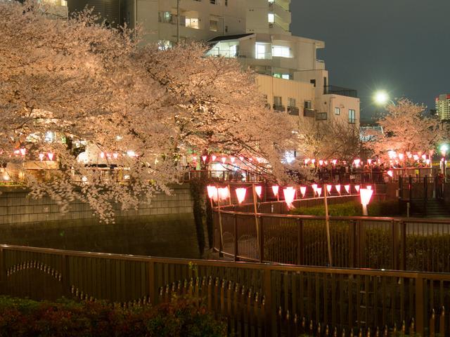20150402_中目黒_桜-5