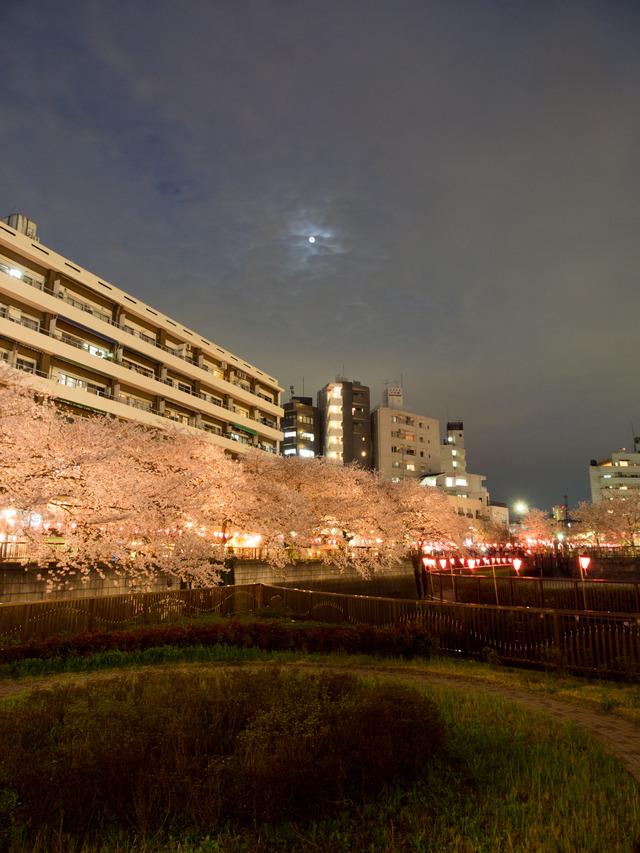 20150402_中目黒_桜-4