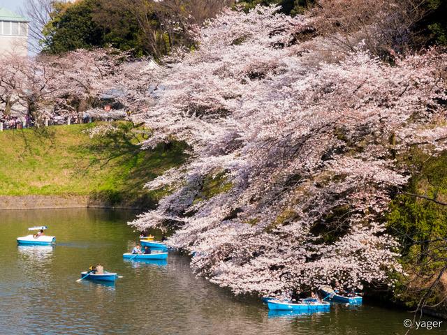 2017-04-04_桜_FZ85_靖国神社千鳥ヶ淵-00006