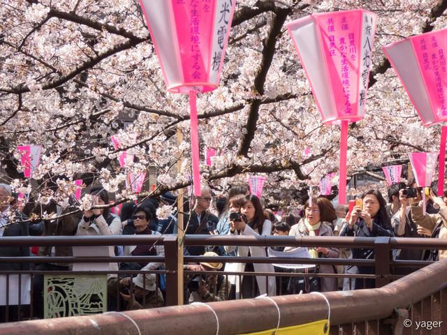 2017-04-04_桜_FZ85_目黒川-00008