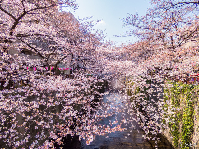 2017-04-04_桜_FZ85_目黒川-00016