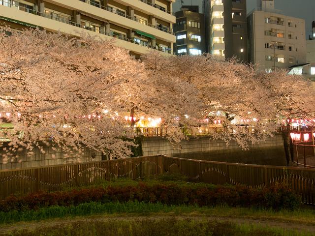 20150402_中目黒_桜-6