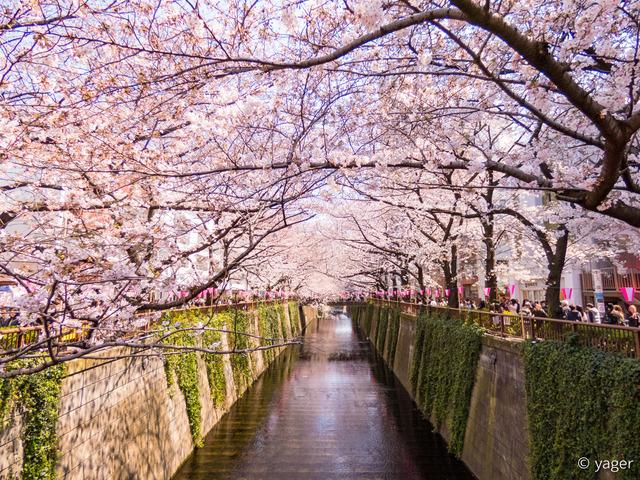 2017-04-04_桜_FZ85_目黒川-00013