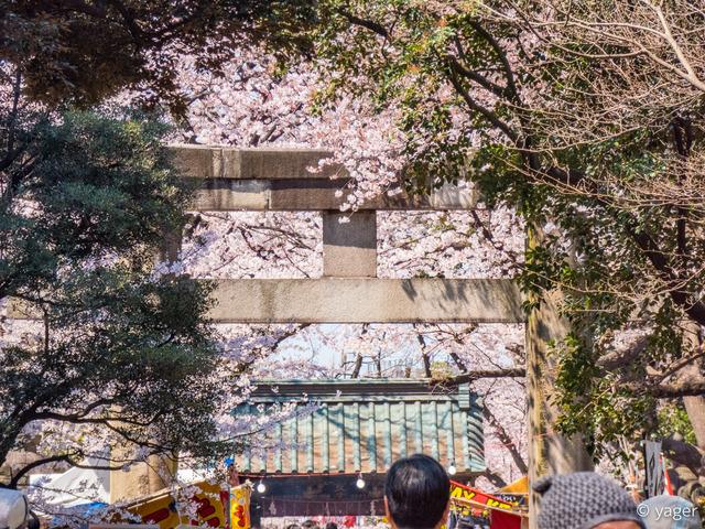 2017-04-04_桜_FZ85_上野公園-00008