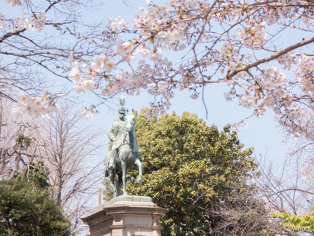 2017-04-04_桜_FZ85_上野公園-00011