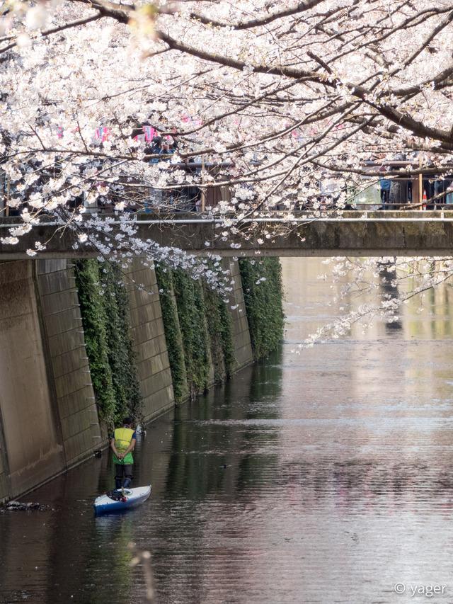 2017-04-04_桜_FZ85_目黒川-00005